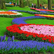 Keukenhof and flower fields